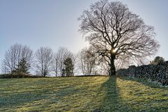 A backlit tree in the corner of a sloping field. Stock Images