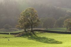 Backlit tree in meadow Royalty Free Stock Photography