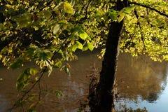 Backlit Tree Royalty Free Stock Photo