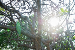 Backlit tree. Backlit tree in temple`s courtyard Royalty Free Stock Photography