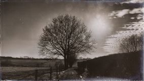 Backlit tree in a vintage landscape with some clouds. Vintage landscape in Flanders - Belgium with trees at sunset royalty free stock image