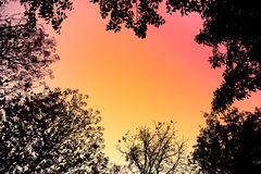 Backlit trees and branches in retro style for Abstract background. Stock Photos