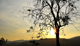 Backlit trees branches and sunset sky on evening time Stock Photo