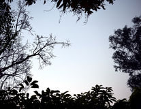 Backlit treetop Black like a picture frame Royalty Free Stock Photos