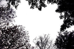 Backlit treetop Black like a picture frame Royalty Free Stock Image