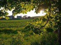 Backlit ulistnienia drzewo opuszcza z domami i polami Obrazy Royalty Free
