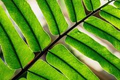 Backlit varensectie - Royalty-vrije Stock Foto's
