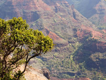 Backlit view down Waimea Canyon Royalty Free Stock Photos