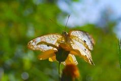 Backlit vlinder Royalty-vrije Stock Foto's