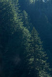 Backlit Waterfall Misted Trees Vertical. Sun shines through the mist cast off from a waterfall onto the pine trees in the mountain forest Royalty Free Stock Image