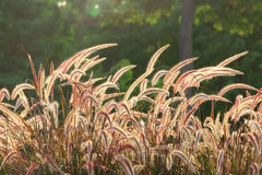 Backlit Wild Stems Stock Image