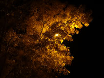 Backlit yellow tree Royalty Free Stock Images