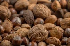 Backnut Stock Photography