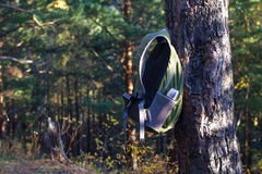Backpack hanging on pine tree. In conifers forest Stock Photo