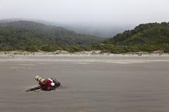 Backpack la menzogne nella spiaggia al parco nazionale di Chiloe. Fotografie Stock Libere da Diritti