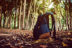 Backpack in the north siberian taiga forest Royalty Free Stock Images