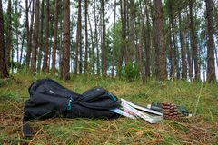 Backpack in a pinetree forest with bools royalty free stock images