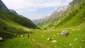 Backpacker που στο ειδυλλιακό τοπίο Θερινές περιπέτειες και εξερεύνηση στις Άλπεις, μέσω του ανθίζοντας λιβαδιού και της πράσινης απόθεμα βίντεο