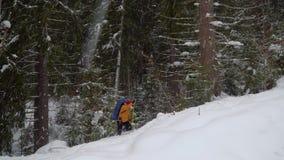 Backpacker που στο χειμερινό δάσος απόθεμα βίντεο