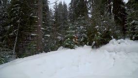 Backpacker που στο χειμερινό δάσος φιλμ μικρού μήκους