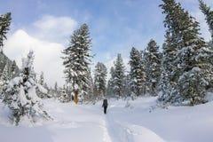 Backpacker девушки идя на дорогу леса в лесе зимы внутри Стоковая Фотография RF