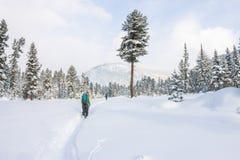Backpacker девушки идя на дорогу леса в лесе зимы внутри Стоковое Фото