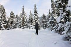 Backpacker девушки идя на дорогу леса в лесе зимы внутри Стоковое Изображение