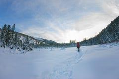 Backpacker девушки идя на дорогу леса в лесе зимы внутри Стоковая Фотография