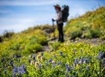 Backpacker и цветки Стоковая Фотография RF