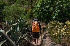 Backpacker на пути через лес в горах Активные праздники в горах Стоковые Фотографии RF