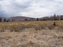 Backpacker сидит и вытаращится на дюнах на больших песчанных дюнах национальных стоковая фотография rf