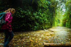 Backpacker exploring Fern Canyon California Royalty Free Stock Images