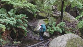 Backpacker in forest stock video footage