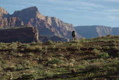 Backpacker, Grand Canyon Stock Image