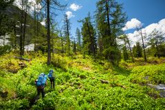 Backpacker is hiking in highlands of Altai mountains, Russia. ю Stock Image