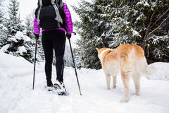 Backpacker hiking walking in winter forest with dog Royalty Free Stock Image