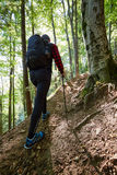 Backpacker hiking into the woods Stock Photos