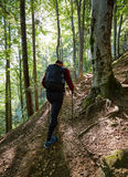 Backpacker hiking into the woods Royalty Free Stock Images