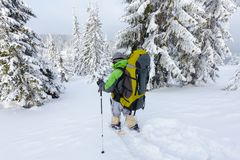 Backpacker men is walking in forest in wintertime Stock Photography