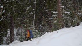 Backpacker que camina en bosque del invierno almacen de metraje de vídeo