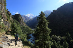 Backpacker trekking on himalaya mountains Royalty Free Stock Images