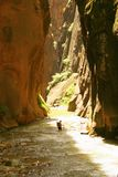 Backpacker in Zion Narrows. Zion National Park Stock Images