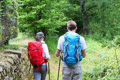 Backpackers hikers walking in forest. Back view of couple of hikers walking in forest path Royalty Free Stock Photo