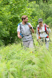 Backpackers on hiking journey walking in forest. Backpackers on a hiking journey royalty free stock image