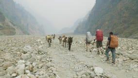 Backpackers met gidsgang op Manaslu-trek van de bergkring in Nepal stock videobeelden