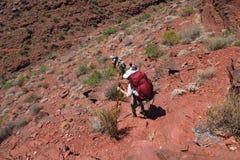 Backpackers pochodzi Tonto Wlec w Kopalnym jarze w Grand Canyon parku narodowym zdjęcie stock