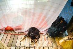 Backpacking com um cão foto de stock royalty free