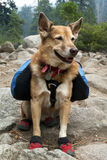 Backpacking Dog Royalty Free Stock Photos