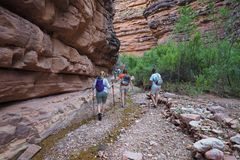 Backpacking family hiking in Hance Creek in the Grand Canyon. Family of backpackers day hiking in Hance Creek during a multi-day backpacking trip in Grand royalty free stock photos