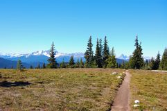 Backpacking/Hiking Path through the alpine meadows into the trees looking towards snow capped mountains stock image